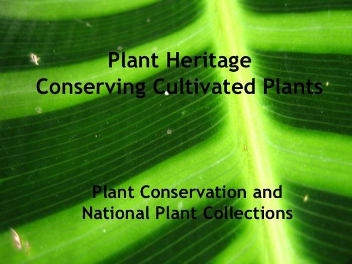 Plant Heritage AUG 10