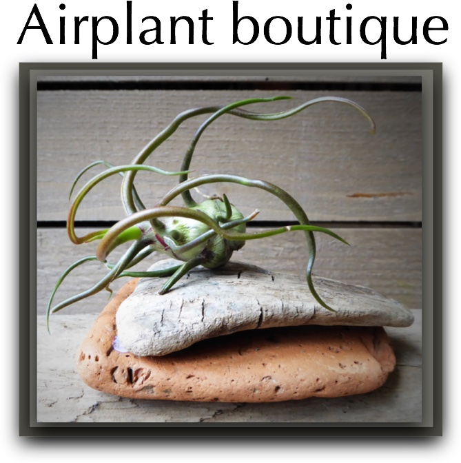airplant button
